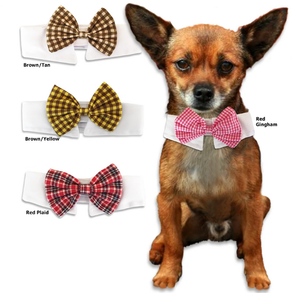 Snappy Bow Tie on a White Shirt Collar for Small Dogs