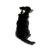 Bee Dog Collar, , Collar, Small Dog Mall, Small Dog Mall - Good things for little dogs.  - 1