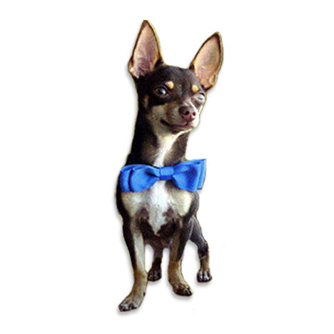 Fun Blue Bow Tie Dog Collar, , Collar, Small Dog Mall, Small Dog Mall - Good things for little dogs.  - 1