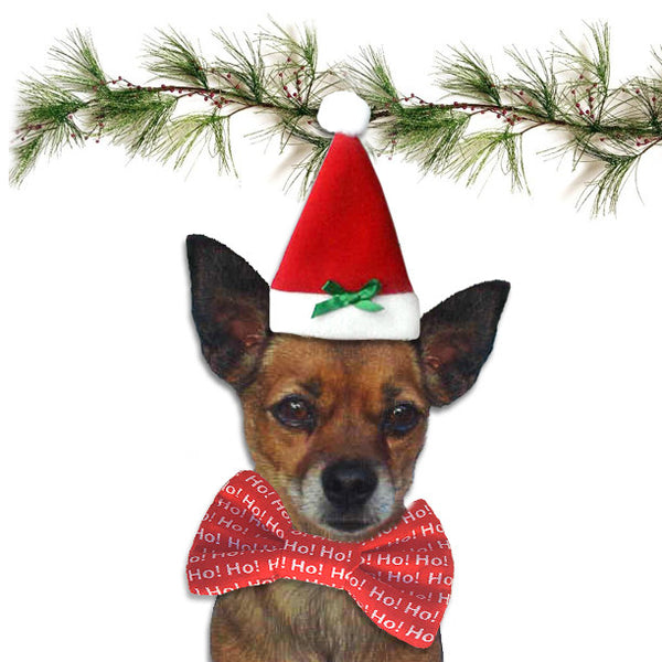 Christmas Santa Hat for Dogs, , Christmas, Small Dog Mall, Small Dog Mall - Good things for little dogs.  - 2