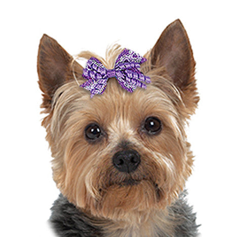 Lace & Curls Dog Hair Bows, , Hair Accessory, Small Dog Mall, Small Dog Mall - Good things for little dogs.  - 1