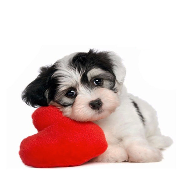 Romantic Red Heart Small Dog Toy