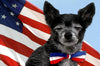 Red, White & Blue Dog Bowtie Collar, , Collar, Small Dog Mall, Small Dog Mall - Good things for little dogs.  - 2