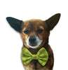 Holiday Tree Bow Tie Dog Collar, , Christmas, Small Dog Mall, Small Dog Mall - Good things for little dogs.  - 1