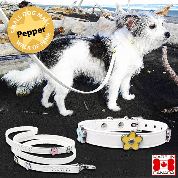 Dramatic White Spring Daisy Small Dog Leather Collar or Leash