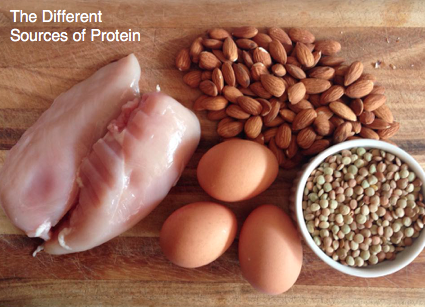 The Different Sources of Protein