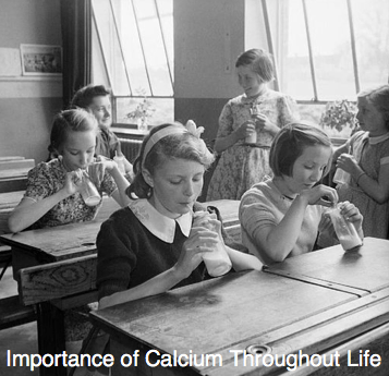 Importance of Calcium Throughout Life