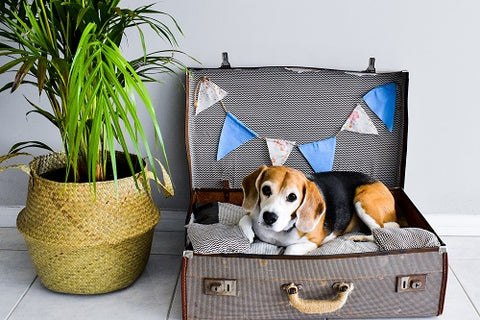 upcycled suitcase into dog bed