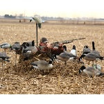 Layout Blind for Goose Hunting Concealment