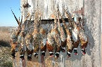 Best Pheasant Hunting Clothes