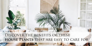 Discover The Benefits Of These House Plants That Are Easy To Care For