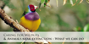 Caring for Wildlife and Animals Near Extinction - What We Can Do