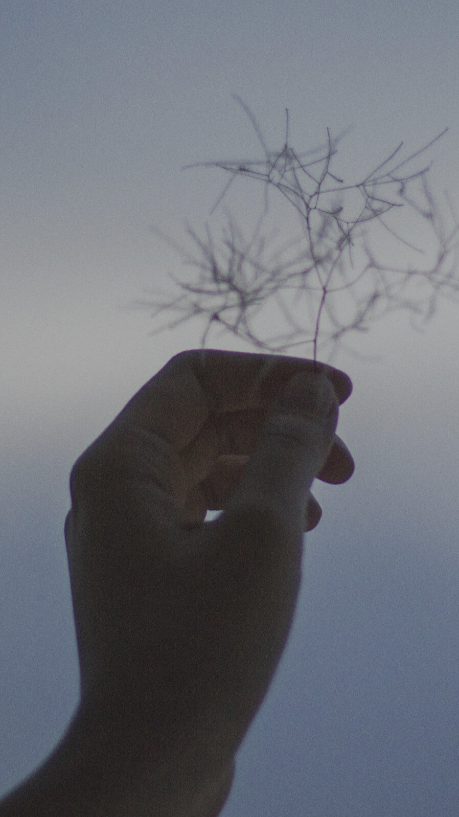 silhouette of a hand holding a plant into the sky