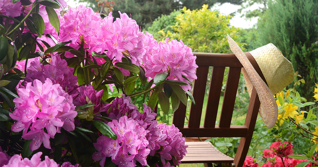 Giftpflanze Rhododendron