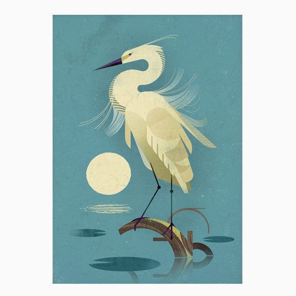 Poster - Little Egret