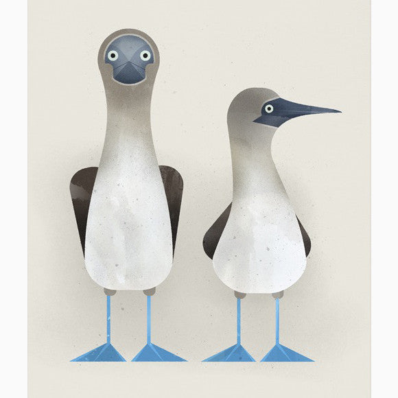 Poster - Blue-fooded Boobies