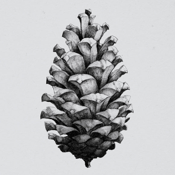 Poster - Nature 1:1 Pine Cone grey