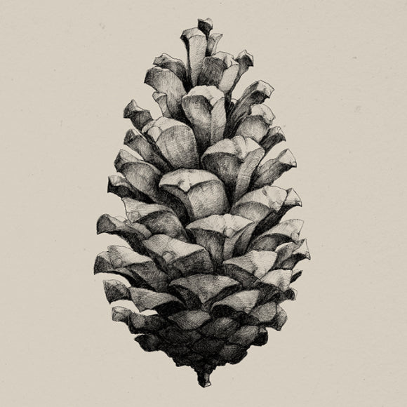 Poster - Nature 1:1 Pine Cone sand