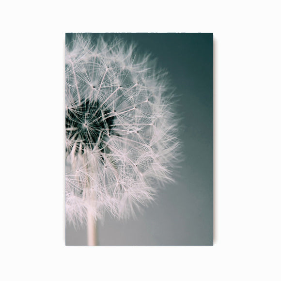 Postkarte - Dandelion Dream