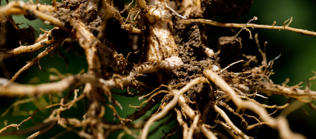 regenerative-agriculture-farming-huel-soil-roots