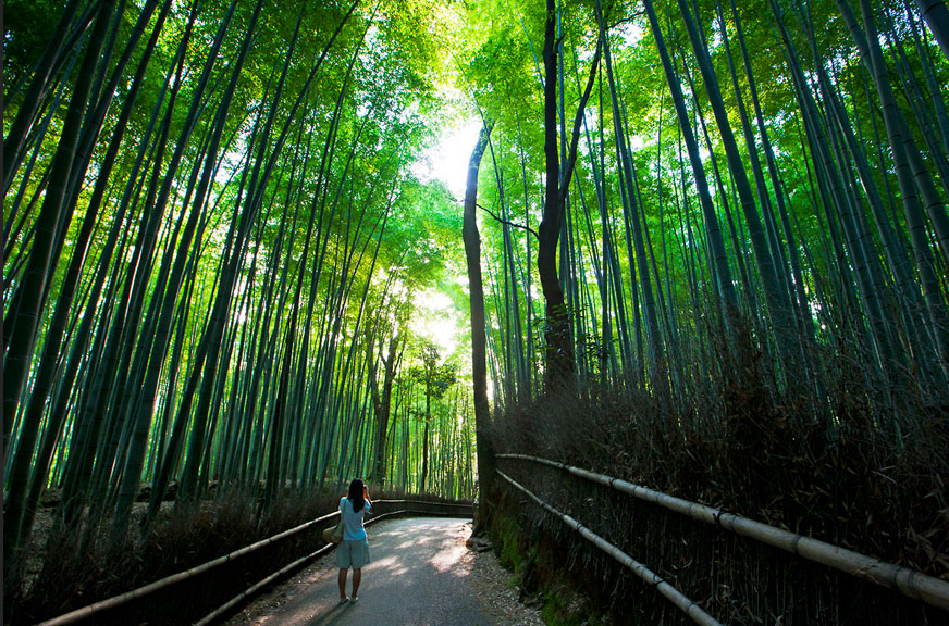 Walking between Bamboo Forest