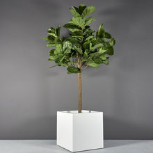 "Load image into Gallery viewer, Jay Scotts Montroy Cube Square Fiberglass Planter: 36""L x 36""W x 36""H"