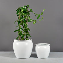 "Load image into Gallery viewer, Jay Scotts Shanghai Round Planter: 16"" x 14""H"
