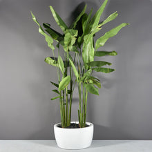 "Load image into Gallery viewer, Jay Scotts Casablanca Round Planter: 30"" x 15""H"