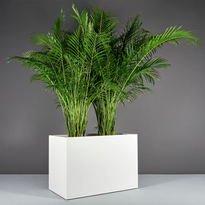 Brisbane Rectangular Fiberglass Planter Box