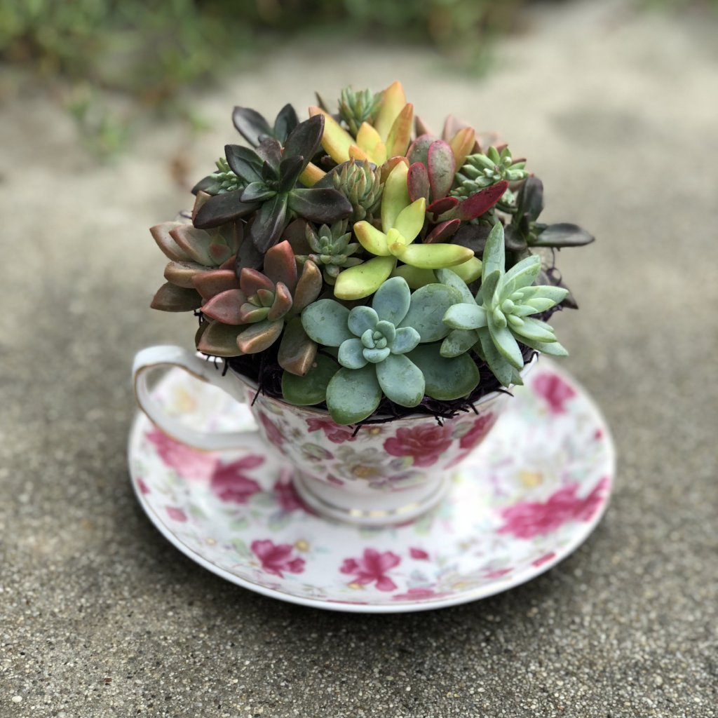 Good Morning Cactus Modern Pink Floral Teacup Arrangement Make