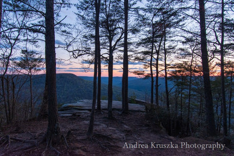 Trees at Welch Point in Sparta, Tennessee at sunset