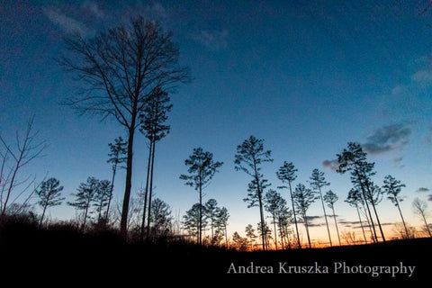 Trees in Virgin Falls State Natural Area and Bridgeston WMA in Sparta, Tennessee just past sunset