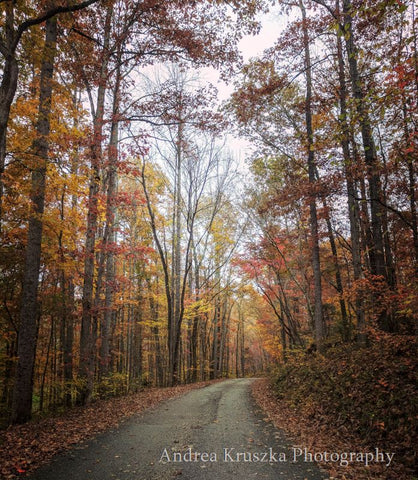 A fall road in Overton County Tennessee