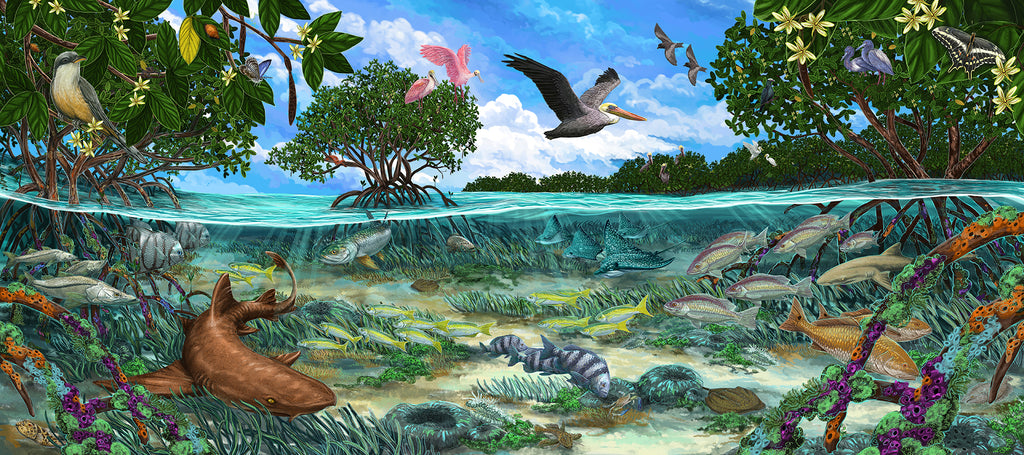 Biscayne National Park Artwork by Kelly Quinn
