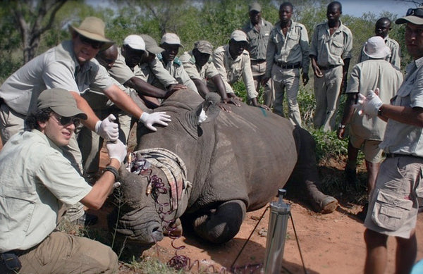 Rhino Rescue Team in Action