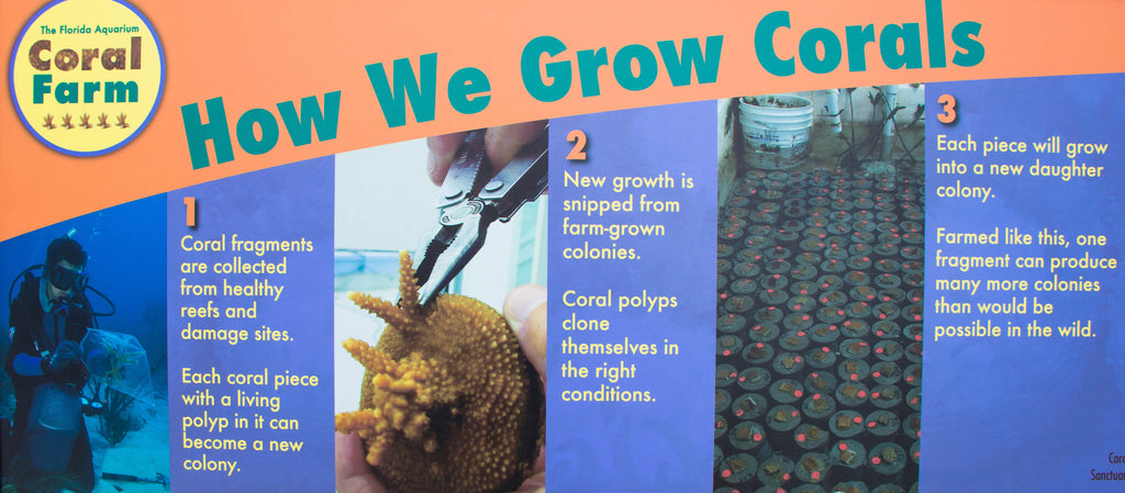 How We Grow Corals Infograph