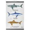 Pelagic Hanging Canvas Prints