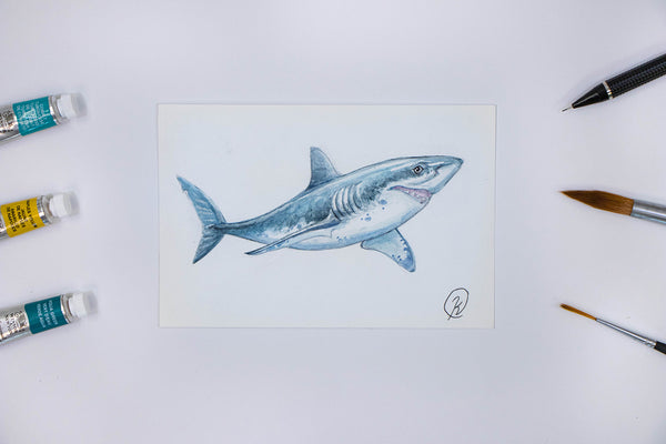 Great White Shark Watercolor Postcard