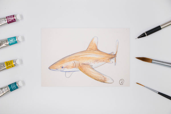 Oceanic White Tip Watercolor Postcard