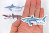 Pre-Order Shark Sticker Pack