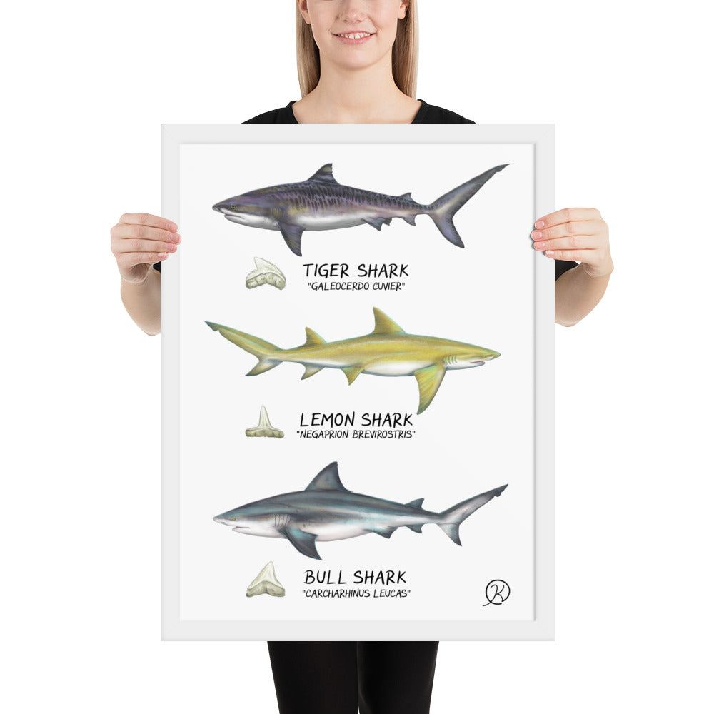 Framed glossy poster | Sharks of Biscayne