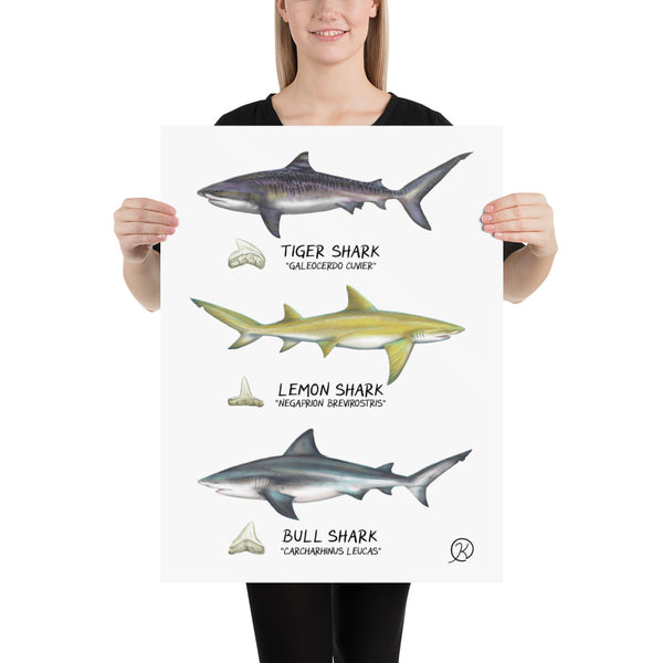 Intercoastal Sharks poster | Biscayne Bay