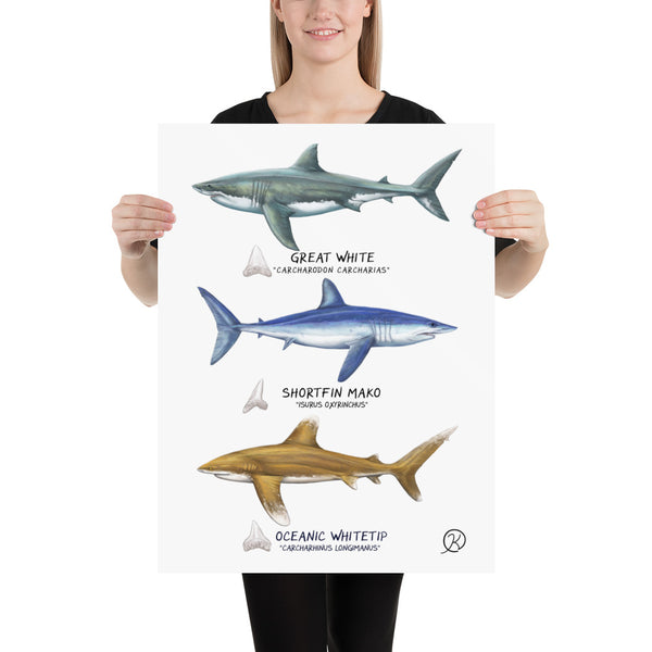 Pelagic Shark Poster