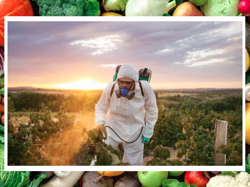 GMOs are making us sick, can organic foods heal us?