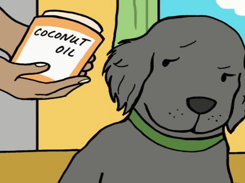 Magical Coconut Oil for Pets!