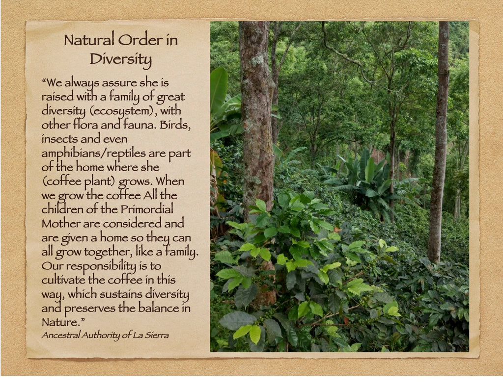 The Mother Earth Restoration Trust Coffee Chocolatree Organic Oasis Ucc Columbia 20 X Gram To Deepen Our Work For In Other Regions Of Colombia That Need It While Giving Us Possibility A Wider Variety Specialty Coffees
