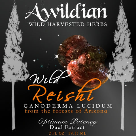 Awildian - Wild Turkey Tail Tincture