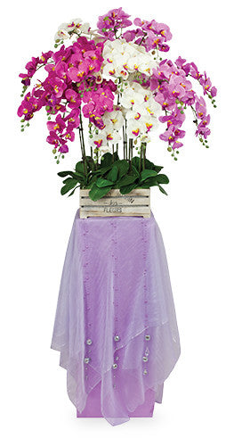 Orchids of Celebration Congratulatory Flower Stand AGP47