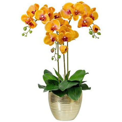Orchids (Flower Type)