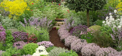 English herb garden with flowering plants